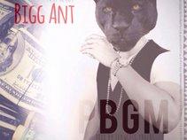 Bigg Ant