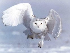 Wyte Owl Recordings