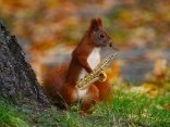 Jammin Squirrel Productions