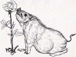 Image for American Swine