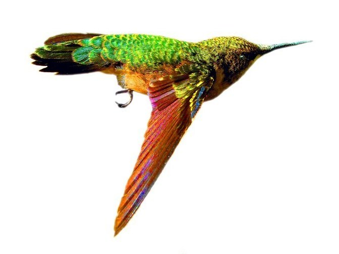 Image for Wings That Buzz