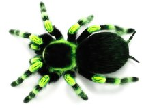 Neon Tarantula