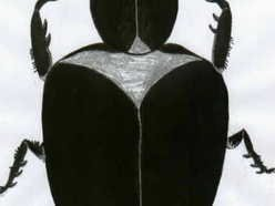 The Dung Beetles