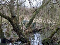 Bagthorpe Bottom Swamp Dwellers