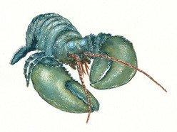 Image for Blu Lobsta