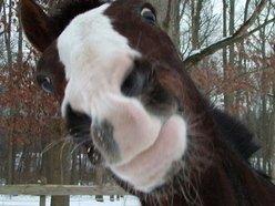 Shit Horse