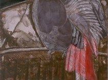 suzibird