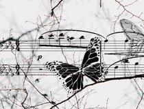 bluegrass butterfly