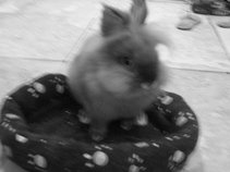 Daisy*cheeze<3