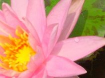 aSmallAndDelicate Flower