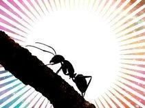 Ant Allan