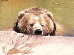 Big Freakin' Brown Bear