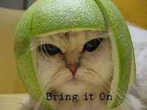 Kitty Lime Pie