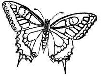Blackbutterfly16