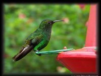 Fotos De Costa Rica