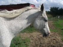gottaluvehorses