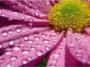 Rain Dee