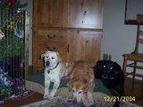 Zac Bigdog Young