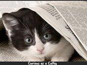 Cathy Kennedy