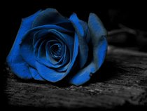 BluePunk