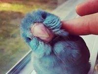 Paradize Tweet