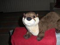 Daween Otter