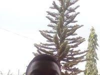 Harry Okyere Jnr