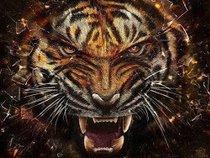 Tiger Elly