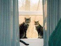Cat-Wrangler