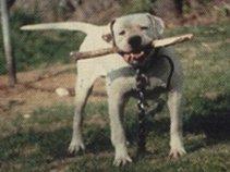 Bulldogge35
