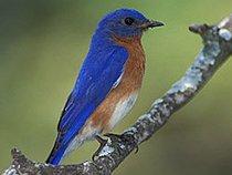 JulieBluebird