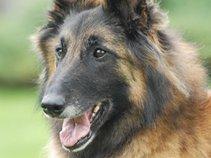 belgianbrowndog