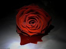 The Bledding Rose