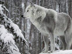 *WinterWolf*