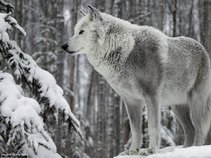 *WinterWolf*