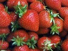 chief strawberry