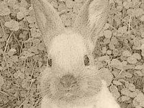 Rabbit Hill Acoustic