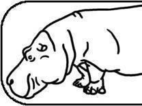 Authority Hippo
