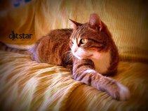 CatStar