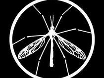 skeeter hawk records