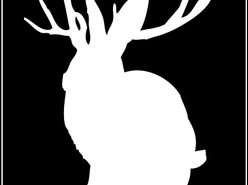 Jackalope Productions