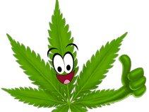 Florida Cannabis Business Alliance