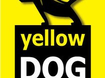 Yellow DOG Studios