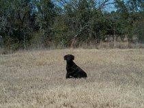 Rango the Dog