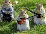 1391847181 squirrel band