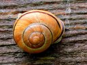 1359182835 the kiss of the snail