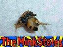 Bee  a Mink