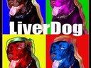 LiverDog