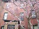 1365322467 magnolia3resize