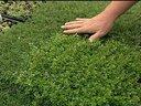 1367465403 herbs2 lg